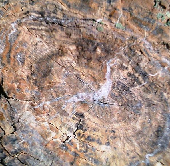 Petrified-log-section-detail-PFNP-AZ.jpg