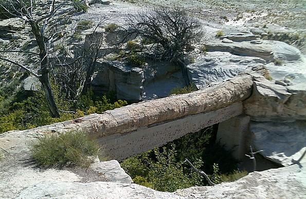 Petrified-log-natural-bridge-PFNP-AZ.jpg