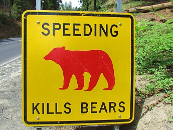 Speeding-Kills-Bears.jpg