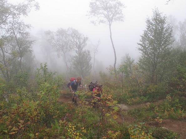 Upward-through-the-fog.jpg