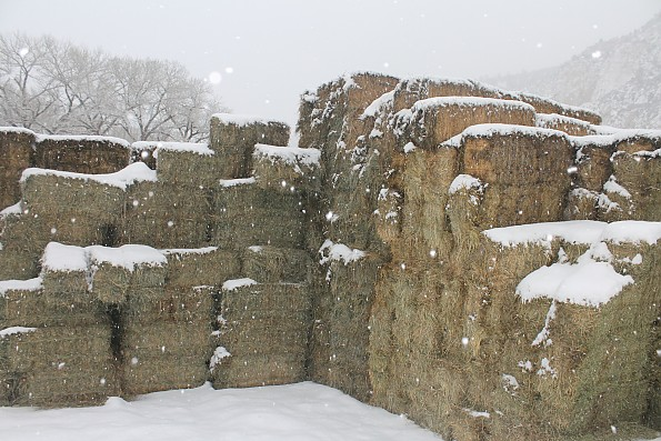 IMG_1532-Hay-bales-in-the-snow-12-7-13.j