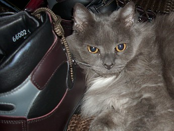 scarpa-cat-004.jpg