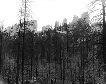IMG_2950_1-burn-area-less-dramatic.jpg
