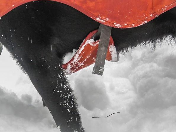 snowshoe61-31-fuse.jpg