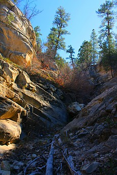 IMG_1263-In-upper-Spring-Hollow-below-Gl