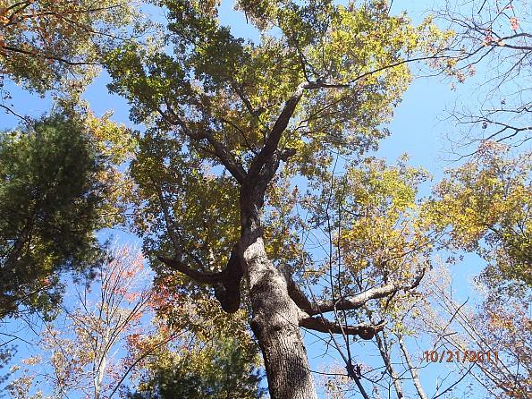Fall-4-2011-117.jpg