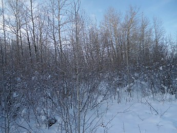 CE-Lee-8-December-2012-018.jpg