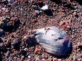 Lava-bomb-on-rim-of-SP-Crater.jpg
