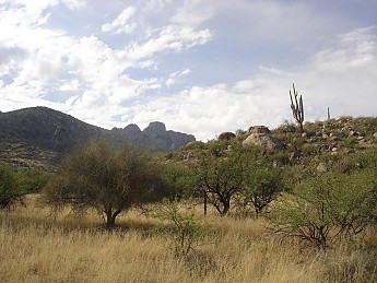 View-of-mountains-in-west-Catalinas-alon