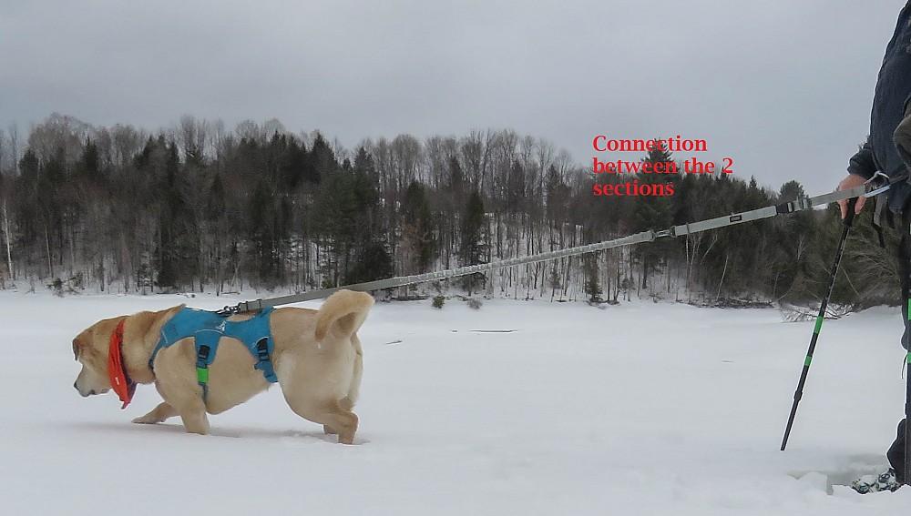 photo: Stunt Puppy  Stunt Runner dog leash