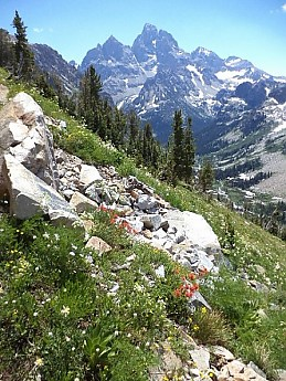 Indian-Paintbrush-in-N-Cascade-Canyon-GT