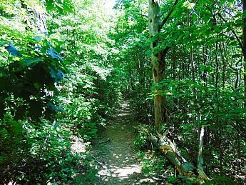Cminey-Rock-Trail-Resisized-.jpg