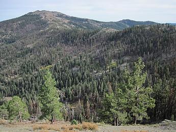 Cedar-Basin-and-South-Yolla-Bolly-Mounta