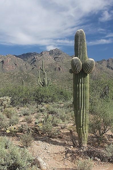 Saguaro-2014.jpg