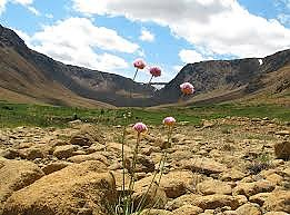 Tablelands-flower.jpg