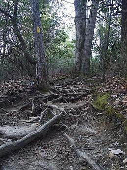 LGR-trail-2.jpg