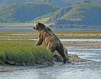 Kukak-brown-bear-.jpg