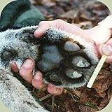 cougarfoot2.jpg