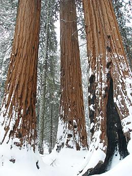 Giant-Forest-2-7-09-069.jpg