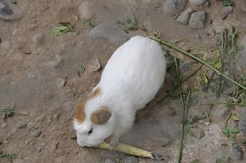 Peru2011Tour002.jpg
