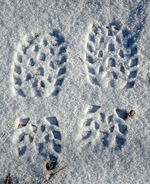 IMG_20161217_142733788-Snow-Print.jpg