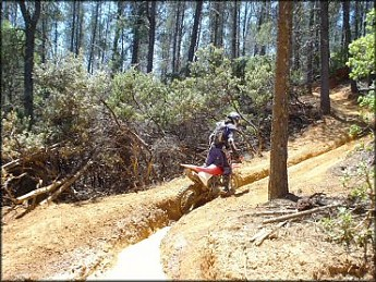 Rutted-bike-trail.jpg