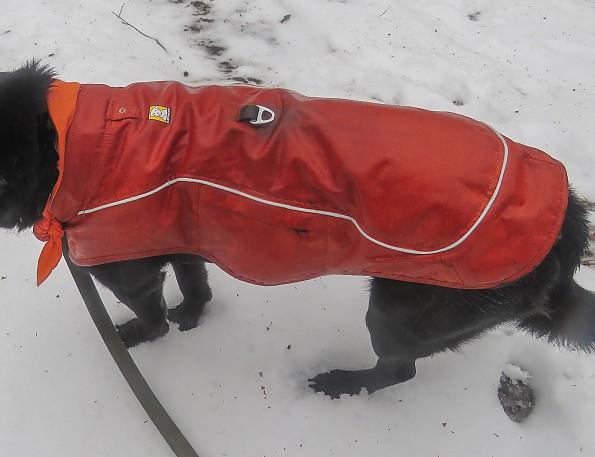 snowshoe20-21-fuse.jpg