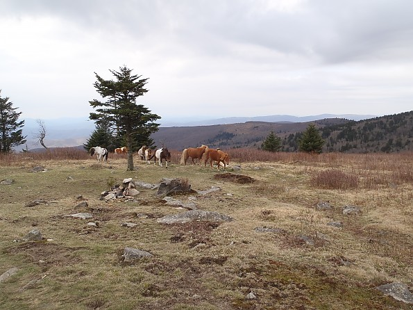 Grayson-Highlands-1-2012-099.jpg