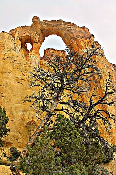 IMG_0949-Old-tree-and-Grosvenors-Arch-.j