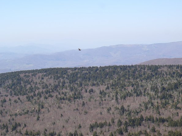 Grayson-Highlands-1-2012-236.jpg
