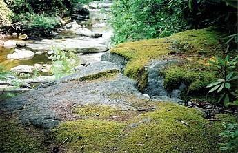 61-10-smaller-moss-rock.jpg
