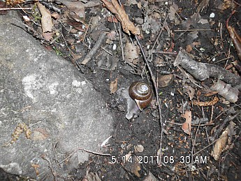 Spring-Trip-3-2011-040.jpg