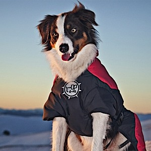 photo of a D-Fa dog coat/vest