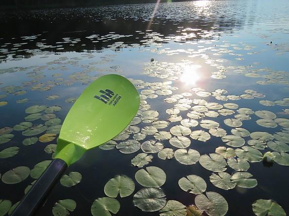 sunrise-wolcott-pond-43.jpg