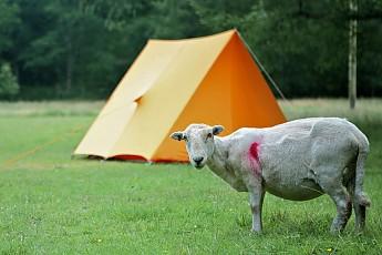 Sheepcamp.jpg