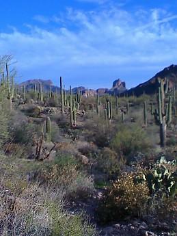 Saguaro-s-and-Peaks.jpg