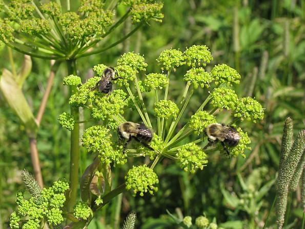 15-Bumbles-bees-were-everywhere.jpg