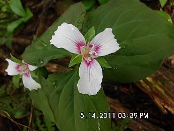 Spring-Trip-3-2011-115.jpg