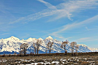 2318-Grand-Teton-and-cottonwood-trees-no