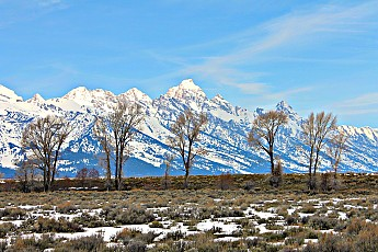 2319-Grand-Teton-and-cottonwood-trees-fr