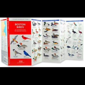Waterford Press Boston Birds - An Introduction to Familiar Species