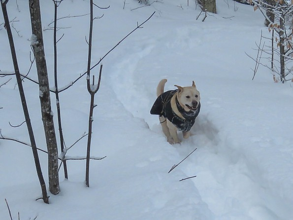 tubbs62-25jan-grrsp-22-dog-coat-running.jpg