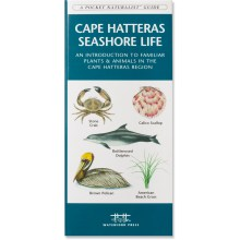 Waterford Press Cape Hatteras Seashore Life