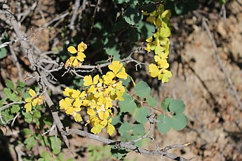 Bright-yellow-leaves-on-a-trail-side-tre