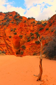 IMG_1368-Old-tree-stands-near-Red-Cave-e
