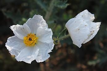 Wildflower-4.jpg