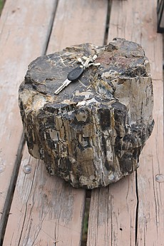 Petrified-wood-found-near-Orderville-Uta