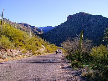 04-Dropping-into-Sabino-Canyon-Palo-Verd