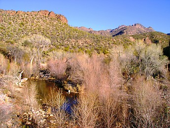 08-Sycamore-trees-along-Lower-Sabino-Can