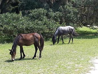 plumb-orchard-horses1.jpg